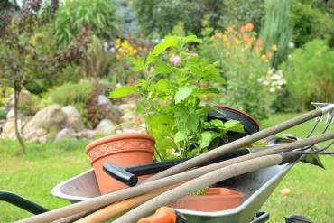 Ochrona roślin bez środków chemicznych