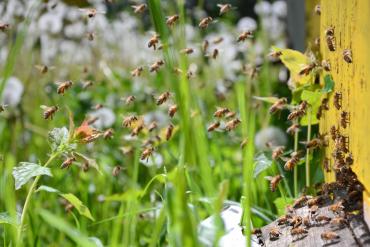 Które owady są pożyteczne i dlaczego?